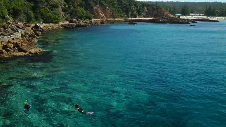 Snorkelling in the waters off the Tathra Wharf with a bumper summer crowd on the surf beach.