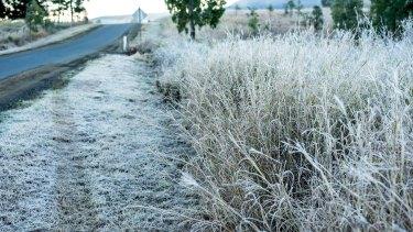 Morning frost in Biddaddaba in Queensland's Scenic Rim region on Sunday, July 5, 2020.