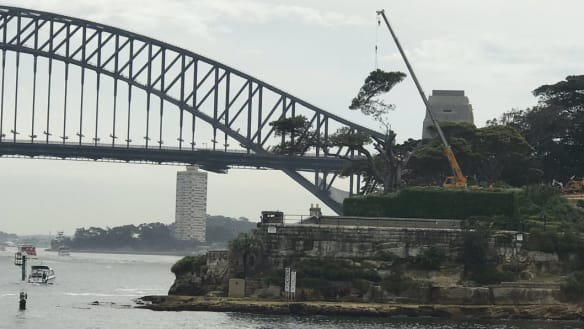 'A real dilemma': Moreton Bay fig tree at Admiralty House cut down to save historic building