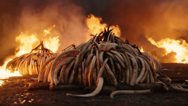 In this still from Anthropocene, elephant tusks burn at Nairobi National Park, Kenya.