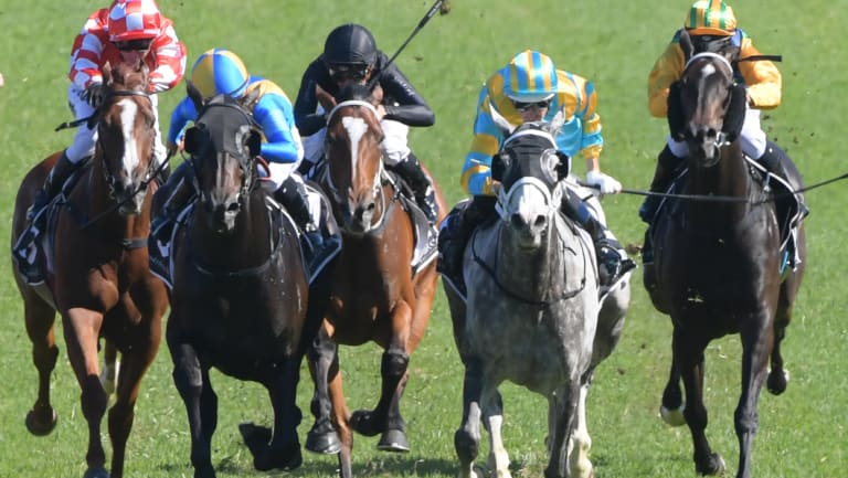 High hopes: My Nordic Hero, second from right with Hugh Bowman in the saddle, returns to Randwick in race 7, the Summer Cup.