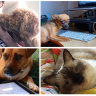 Working like a dog: how pets are taking over home office spaces and social media