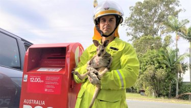 Pimpama Fire and Rescue Service crew was called to an Australia Post box at Woongoolba on the Gold Coast after a baby kangaroo had been put inside.