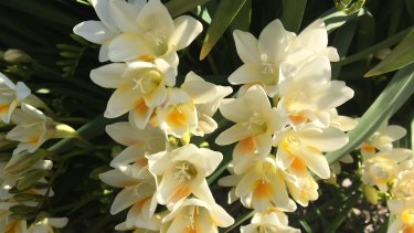 I think my Aunty June found something magical – evanescent even – in all those petals and stems.