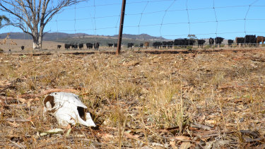 NSW farmer Robert Lee is experiencing the third 1-in-100 year drought in 16 years.