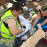 FNQ Wildlife Rescue have been deploying volunteers to the five major colonies around Cairns to save as many bats as they can.