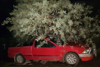 A tree fell on a car.