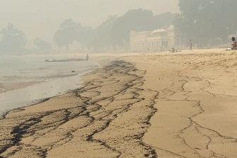 Ash washes ashore at Balmoral Beach during summer.