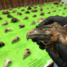 Jail over killing of eagles in a Victorian first