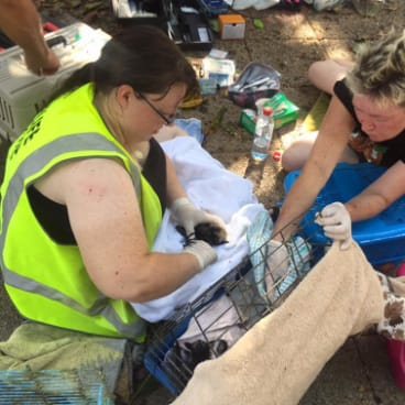 FNQ Wildlife Rescue has allowed five colonies in the five colonies of Cairns to stop volunteering.