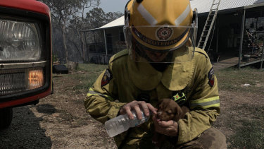 A firefighter helps a thirsty puppy at Deepwater - one of Queensland's worst fire-affected areas.