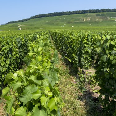 "Owner-growers in France's Champagne region are increasingly ""disrupting"" the making of bubbly."