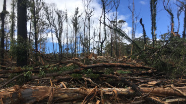 Logging operations in burnt forests on the state's South Coast this week.