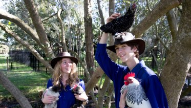 Give your food scraps to the chooks, if you have some.