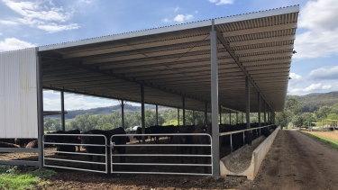 Professor Bob Officer is selling his Wangaratta-based Waygu cattle business.