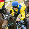 Cellsabeel continues on her Golden Slipper path