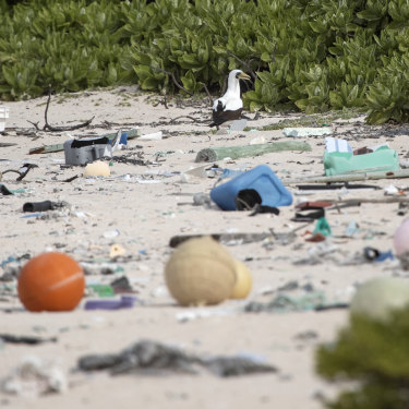 It's estimated that 3500 new items wash up on Henderson Island each day.