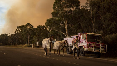 Vanessa Costello leads her horses Duck and Fuzzy along Tynong North Road, out of the bushfire's path.