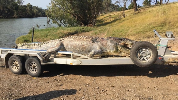 Giant 5.2-metre crocodile found dead with bullet still in its head