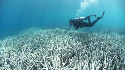 UNESCO Barrier Reef report says 'outstanding values' have worsened