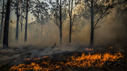 'Australians don't want to die from fires': rising risk of poor health due to climate change