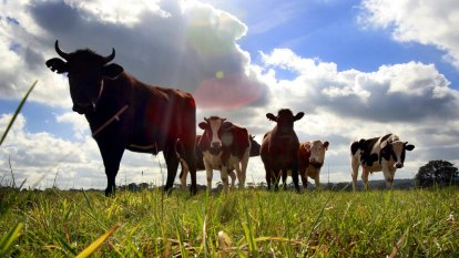 Help us to manage the environment, Queensland farmers ask government