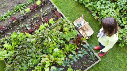 Researchers warn of unsafe lead levels in garden soil in many homes