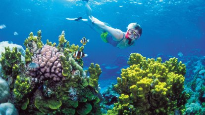 Ministerial moan will not help to save our reef