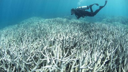 Concerns rise for Great Barrier Reef health as corals start to bleach