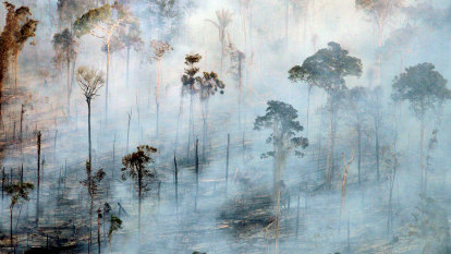 'Cascade effect': Amazon basin switches from carbon sink to CO2 source