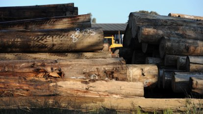 Immediate end to old-growth logging, as thousands of jobs set to go