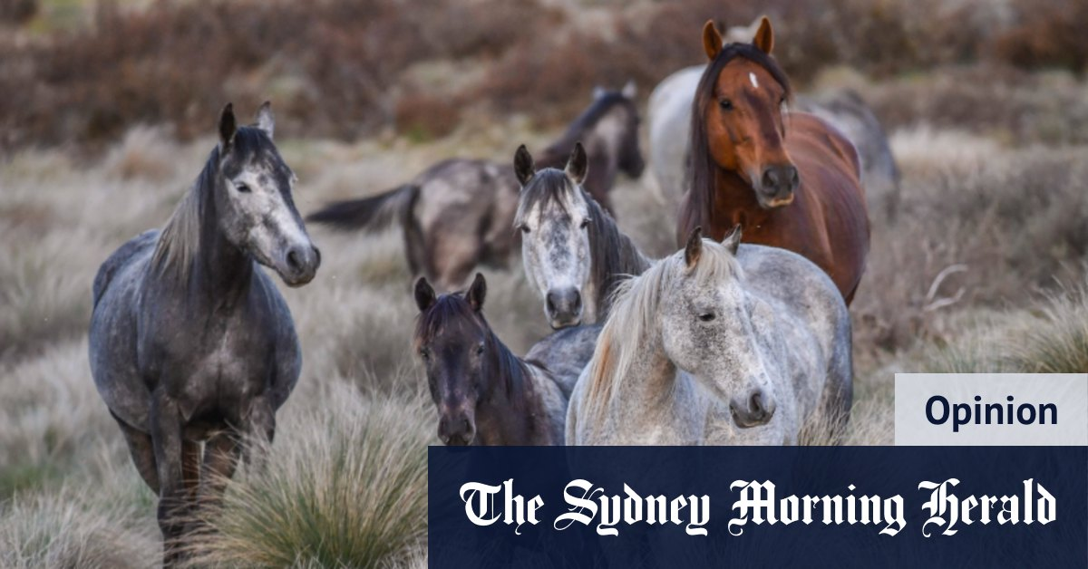 Why Barilaro's 'brumby bill' has been a catastrophe