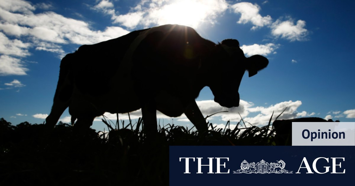 Chinese owners of scandal-ridden dairy scramble to sell the farm