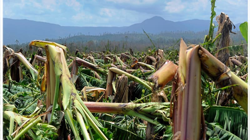 afr.com - James Fernyhough - Climate change hits supply chains: Allianz