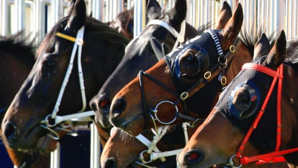 Race-by-race guide and tips for Dubbo on Tuesday
