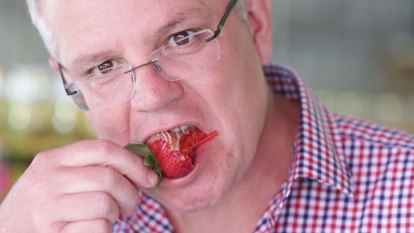 Fair dinkum, Scott Morrison might have helped himself to my rubbish