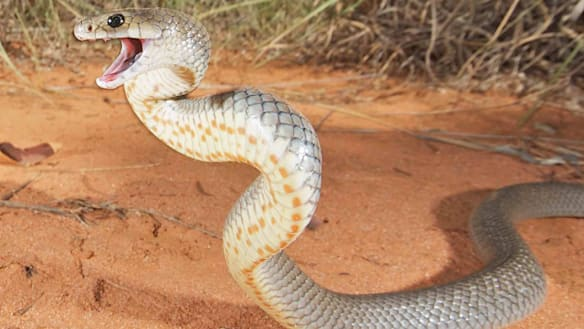 Snake bites more common in south-east Queensland