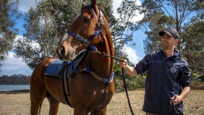 Fell Swoop chasing Single Gaze for Canberra's greatest earner title