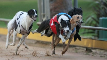 State government backs greyhound racing industry amid live-baiting claims