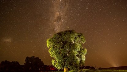 Temporary reprieve for ancient Djab Wurrung trees