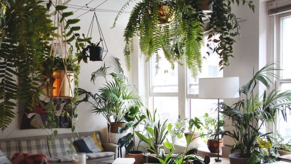 When did millennials start queuing up for indoor plant parties?
