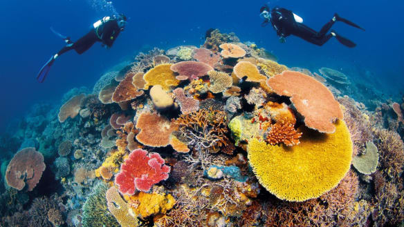 """The $443 million grant to the Great Barrier Reef Foundation was criticised as """"almost mind-blowing""""."""