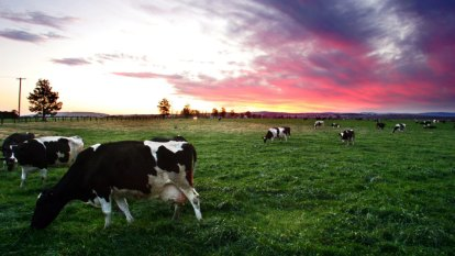 'A staple like bread': Calls for dairy commissioner to help farmers