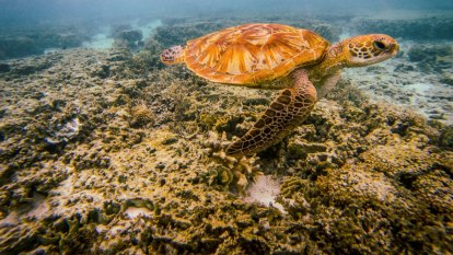 Qld chief scientist backs Great Barrier Reef Foundation's 'resilience' projects