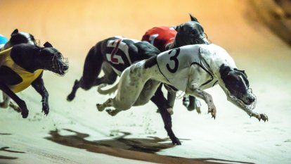 Victorian greyhound trainers suspended