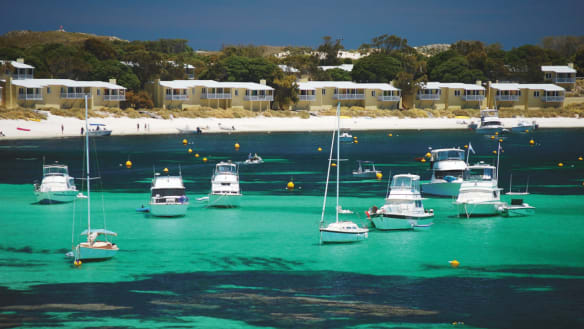 The number one way to see Rottnest Island: childless and solo