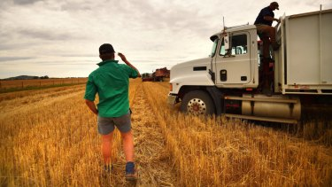 Australian wheat could be a winner from the US-China trade war.
