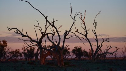 'Critical period' as NSW farmers eye dry winter extending into spring