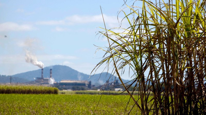 China's trade sweetener provides relief for Australian sugar