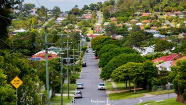More than 450,000 street trees are managed by Brisbane City Council.